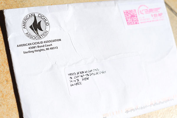 AMERICAN CICHLID ASSOCIATION, la lettre.